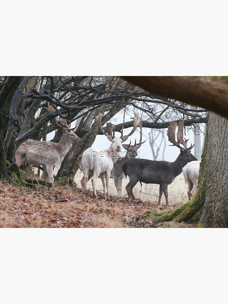 Sussex Bucks by petegrev
