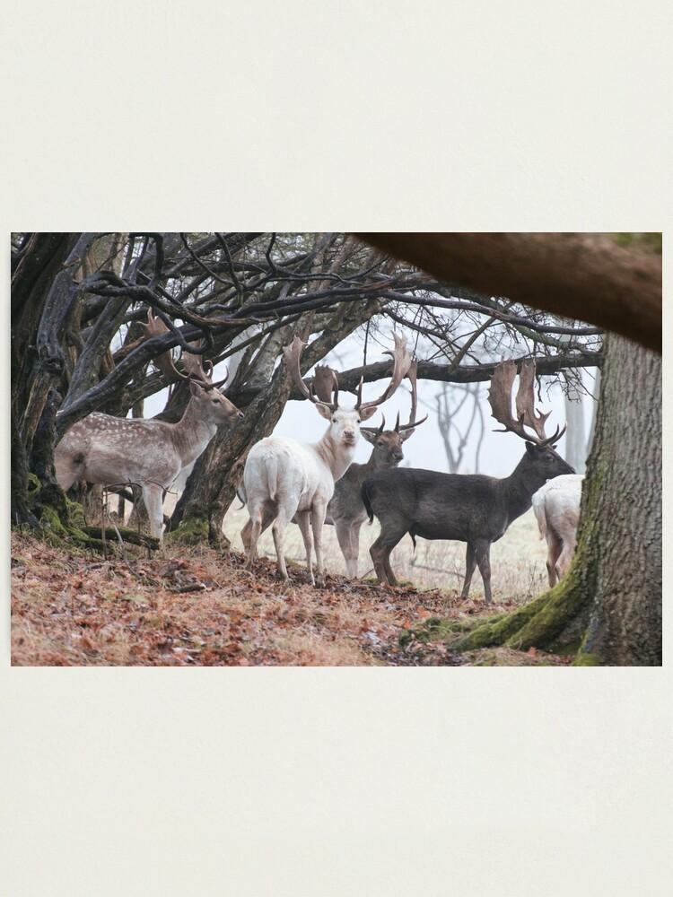Alternate view of Sussex Bucks Photographic Print