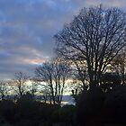Light through the Trees........Lyme Dorset UK by lynn carter