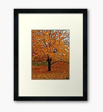 Autumn Impressions #3 Framed Print