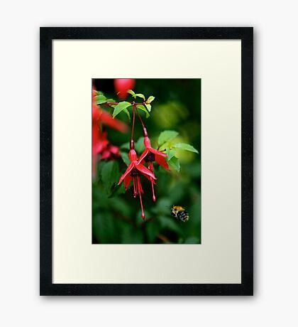 Wild Fuchsia at Loch Na Fooey (tall) Framed Print