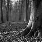 Rooted by willgudgeon