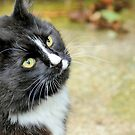 Black & White Cat by AndreaEL