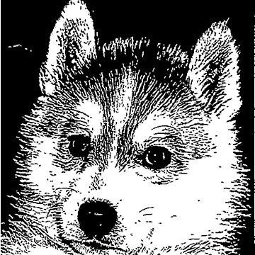 Husky puppy by ritmoboxers