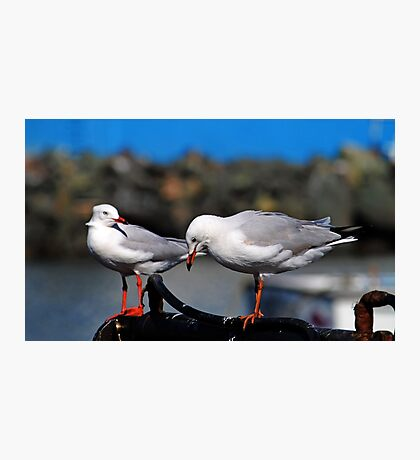 Seagulls Waiting For Lunch Photographic Print