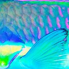 Fin I - Close up detail of Parrot Fish by Karen Willshaw