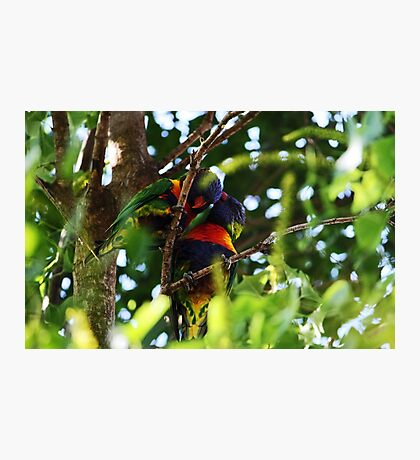 Love Birds Photographic Print
