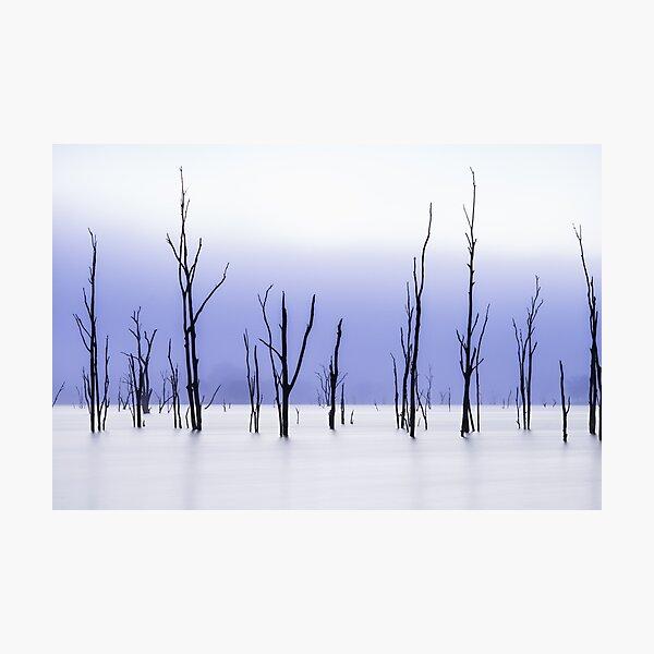 Twigs Photographic Print