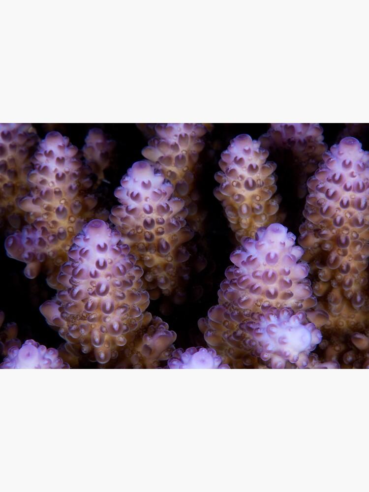 Luminous reef builders by DavidWachenfeld
