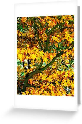 Tree in Autumn colour by Sally Murray