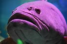 Fish Face by Barberelli