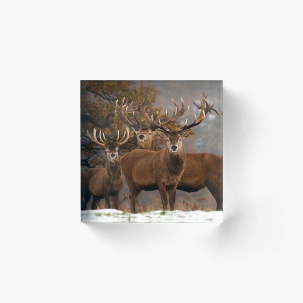 Family Portrait - Red Deer Acrylic Block