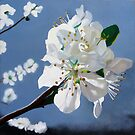 Spring Blossoms by Matthew  Bates