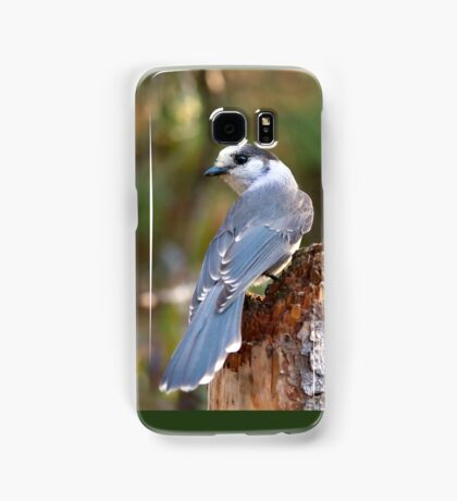 Gray Jay - Algonquin Park Samsung Galaxy Case/Skin