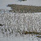 Bird Flock by AnnDixon