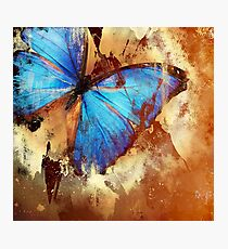 For the butterfly lovers Photographic Print