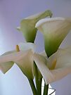 purity calla by LisaBeth