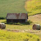 Grassy farmland by zumi