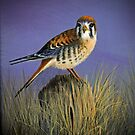 American Kestrel by Rich Summers