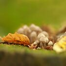 Autumn in a microcosm  by miradorpictures