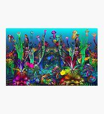 The Happy Apo Reef Photographic Print