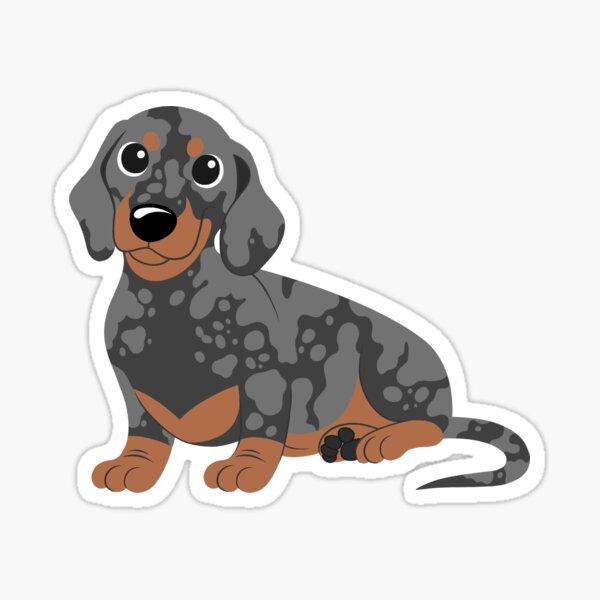 Miniature Dachshund - Black Dapple Sticker