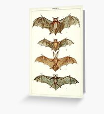 Bat Anatomy Book Plate Greeting Card