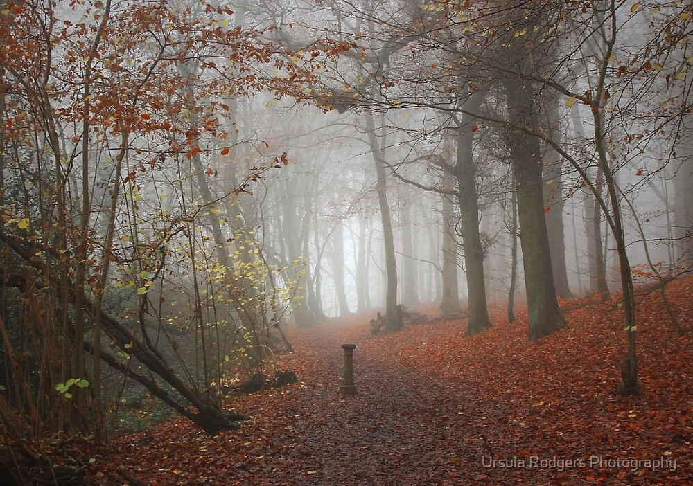 Enter... by Ursula Rodgers Photography