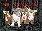 Have A Merry Christmas by Ginny York
