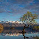 That Wanaka Tree - New Zealand by Lorraine Creagh