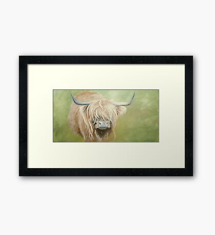 Hairy coo (cow) in grass Framed Print