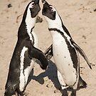 Penguin greeting by Erik Schlogl