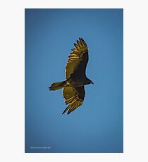 Cathartes Aura - Turkey Vulture | Orient Point, New York Photographic Print