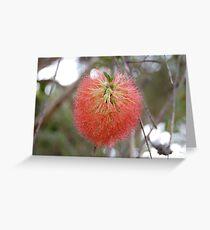 Red Australian Bottle Brush Greeting Card