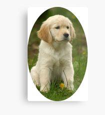 Cute Golden Retriever Puppy Metal Print
