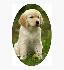 Cute Golden Retriever Puppy Photographic Print
