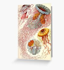 Jellyfish - Ernst Haeckel  Greeting Card