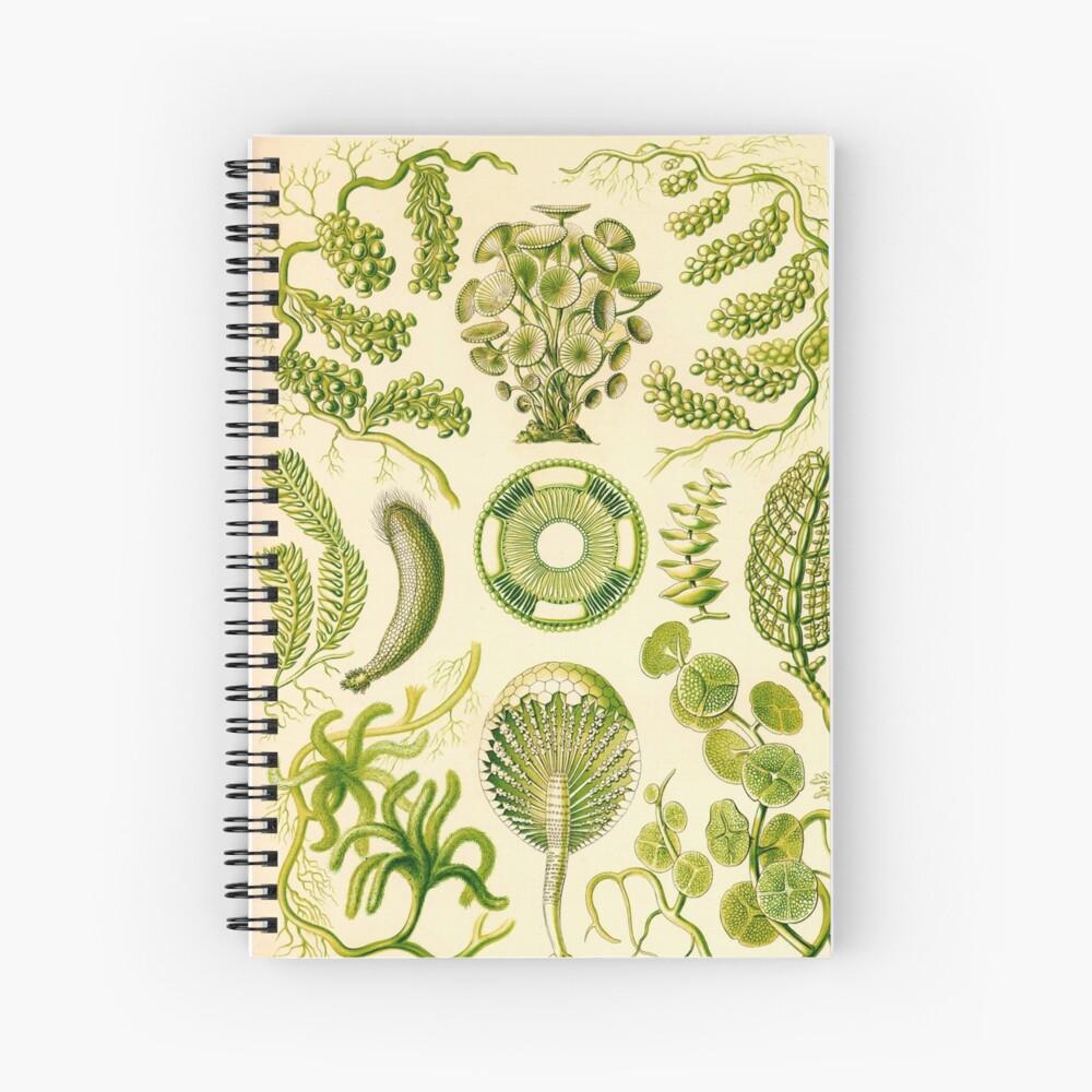 Siphoneae - Ernst Haeckel  Spiral Notebook