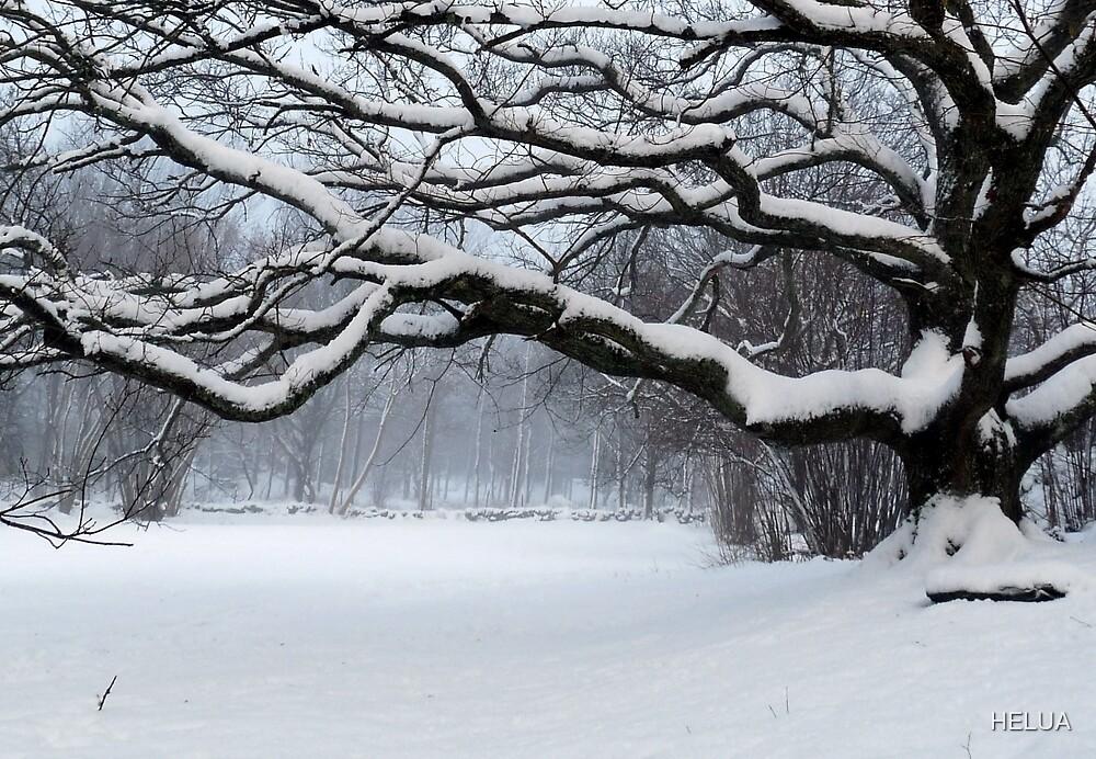 Ice Age - Old Oak by HELUA