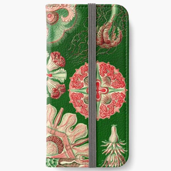 Discomedusae -  Ernst Haeckel iPhone Wallet