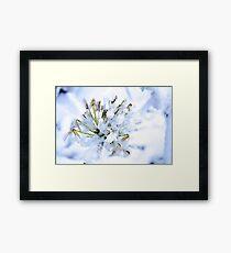 Flowers 13 Framed Print