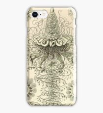 Siphonophorae - Ernst Haeckel  iPhone Case/Skin