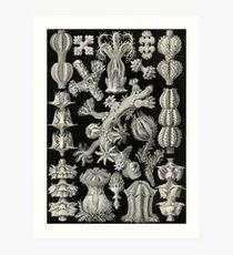 Gorgonida - Ernst Haeckel  Art Print