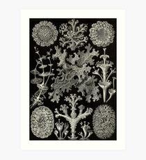 Lichenes - Ernst Haeckel  Art Print