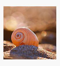 Shell bokeh Photographic Print