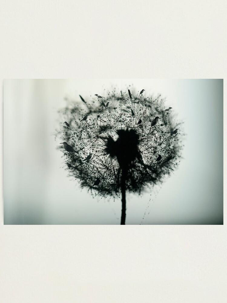 Alternate view of Dandelion Birds photographic Photographic Print