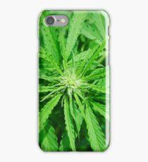 Marijuana Cannabis Weed Pot Plant iPhone Case/Skin