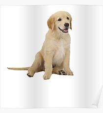Cute Golden Retriever Poster