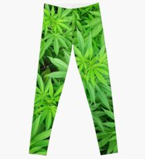 Marijuana Cannabis Weed Pot Plants Leggings