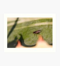 Fly on the leaf of agave Art Print